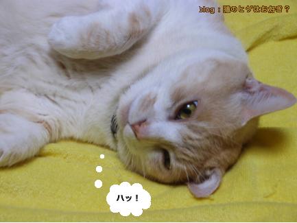 ニー_9.jpg